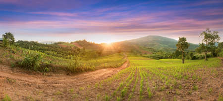 Panorama Green rice field with mountain background landscape of young green rice field and beautiful sky sunset in Thailand. Selective focus and free space for text.