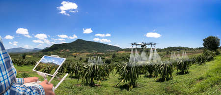 Panorama agriculture drone fly to sprayed fertilizer on dragon fruit. smart farmer use drone for various fields like research analysis, terrain scanning technology, smart technology concept.