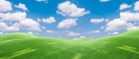Panoramic view to grass  and blue sky with light clouds,Image of green grass field and bright blue sky. Plain landscape background for summer poster. The best view for holiday.