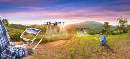 Panorama agriculture drone fly to sprayed fertilizer on rice fruit. smart farmer use drone for various fields like research analysis, terrain scanning technology, smart technology concept.