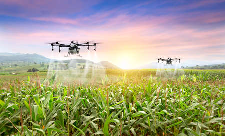 Agriculture drone fly to sprayed fertilizer on the sweet corn fields. smart farmer use drone for various fields like research analysis, terrain scanning technology, smart technology concept. 版權商用圖片