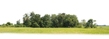 Group of tree. Green treeline isolated on white background.