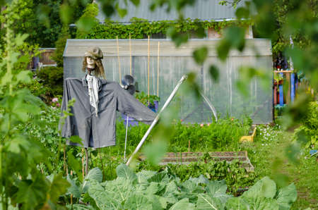 Scarecrow in the garden to protect the crop