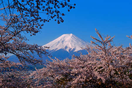 From fujiyoshida City Koutoku Park cherry blossoms and Mt Fuji