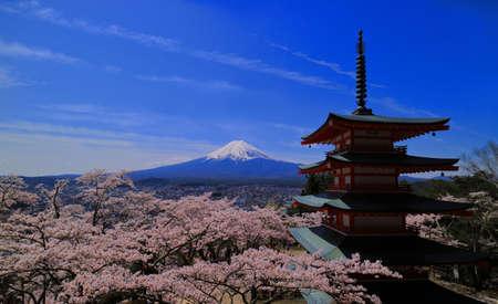 sengen: Cherry blossoms and Mt.Fuji from Arakurayama sengen Park in Fujiyoshida City, 04  23  2017