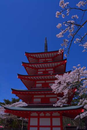 sengen: Five storied pagoda Chureito and Cherry blossoms in Fujiyoshida city Arakurayama Sengen Park Stock Photo