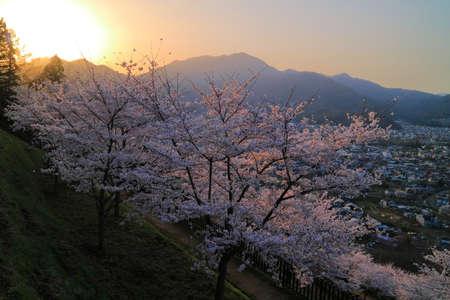sengen: Sunrise and Cherry blossoms from Arakurayama Sengen Park in Fujiyoshida City