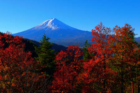 Autumn leaves and Mount Fuji from Kawaguchiko hill 免版税图像