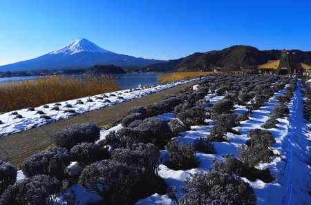 Mount Fuji of winter scene from Lake Kawaguchi Oishi Park Yamanashi Prefecture Japan 01 / 31 / 2018