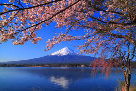 Cherry blossoms and Mt. Fuji from the northern coast of the Lake