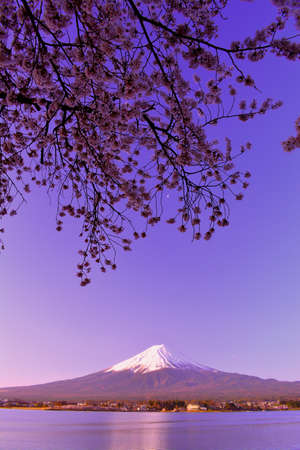 Cherry blossoms and Mt. Fuji at dawn from Lake Kawaguchi Japan 04 / 08 / 2018 免版税图像