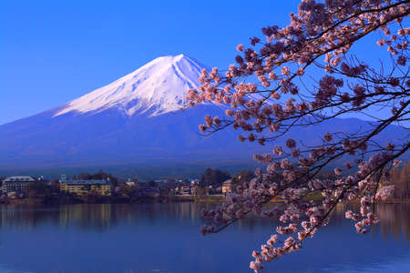 Cherry blossoms and Mt. Fuji with blue sky from