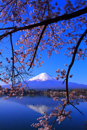 Cherry blossoms and inverted Mt. Fuji with blue sky from