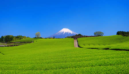 Fresh green tea field and Mt.Fuji Japan 免版税图像