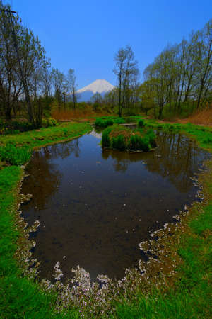 Pond of Oshino Village in Spring and Mt.Fuji Japan 免版税图像