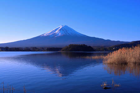 Mt.Fuji with blue sky from Oishi Park in Lake Kawaguchi Japan 01 / 04 / 2019