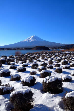 Mt. Fuji with snowy scenery from Oishi Park in Lake Kawaguchi Japan 02 / 02 / 2019 免版税图像