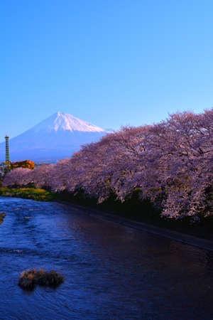 River and cherry blossoms And Mt.Fuji in Fuji City Japan