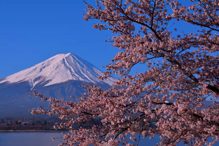 Cherry blossoms and Mt. Fuji of the blue sky clear from Lake Kawaguchi Japan 04 / 13 / 2019