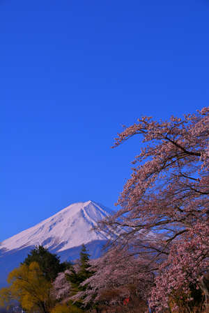 Cherry blossoms of Nagasaki Park in Lake Kawaguchi of blue sky clear and Mt. Fuji