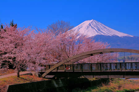 Small bridge in Lake Kawaguchi north shore and Cherry blossoms and Mt. Fuji Japan