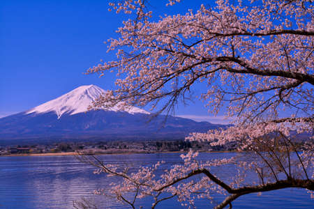 Cherry tree and Mt.Fuji from Nagasaki Park in Lake Kawaguchi Japan 免版税图像