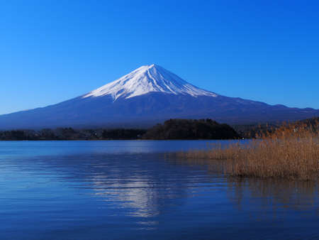 Mt. Fuji of Blue Sky from Oishi Park in Lake Kawaguchi 03/06/2020