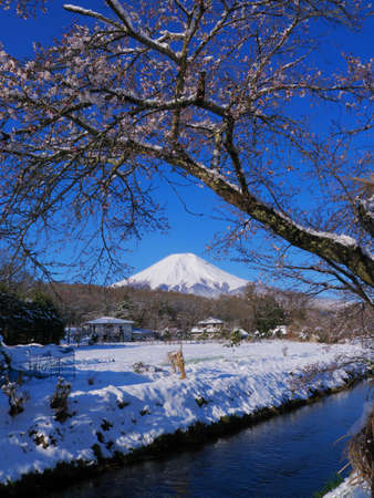 Snow-covered cherry blossoms and Mt. Fuji from Shinnasho River in Oshino Village Japan 04/14/2020