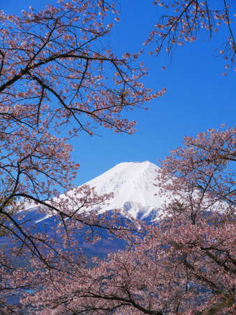 Cherry blossoms and Mt.Fuji from Fujimi Kotoku Park in Fujiyoshida City Yamanashi Japan