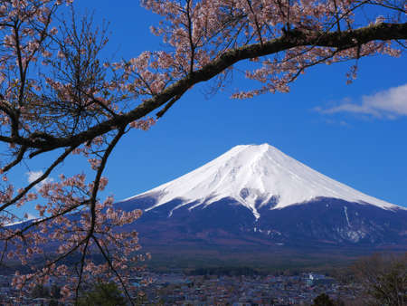 Cherry blossoms and Mt.Fuji from Fujimi Kotoku Park in Fujiyoshida City