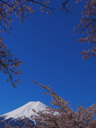 Frame, cherry blossoms in the blue sky and Mt. Fuji, 2020/04/19 Fujiyoshida Fujimi Koutoku Park Japan