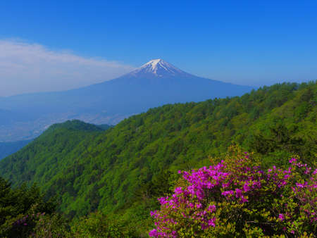 Honey azalea from Mitsutoge Mountain and Mt. Fuji in early summer 06/05/2020 免版税图像