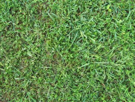 Grass Texture Stockfoto