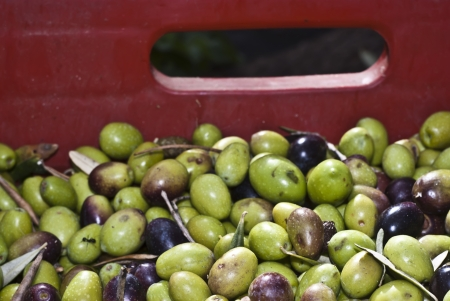 Detail of sicilian olives in the box. Stock Photo - 13961192