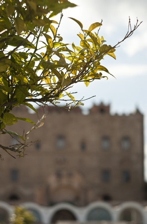 branch and the Zisa Castle in the background. Palermo- Sicily- Italy
