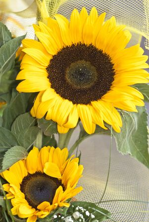 bouquet of sunflowers. two sunflowers with decoration photo