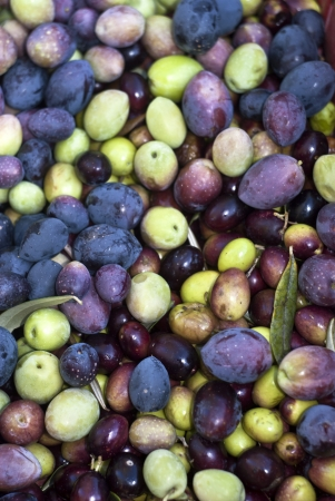 Freshly picked olives and leaves Stock Photo - 16986042
