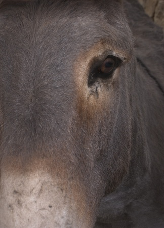 close on a cut donkey. portrait photo