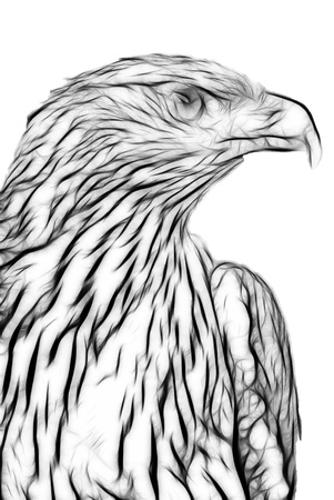 talon: drawing of an eagle.close-up.