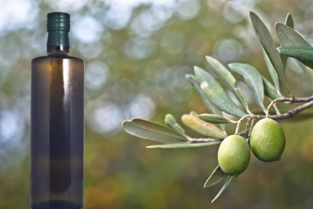 extra virgin: green olives on the tree with bottle of oil. Selective Focus