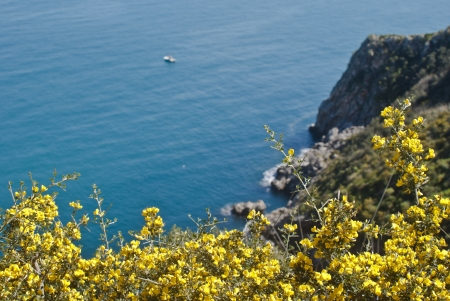 Zingaro Natural Reserve with mimosas, Sicily, Italy photo