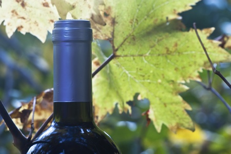wine bottle and young grapevine branch and leaf photo
