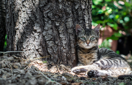 beautiful cat with green eye sitting near a tree trunk photo