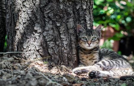 eye green: hermoso gato con ojos verdes se sienta cerca de un tronco de �rbol Foto de archivo