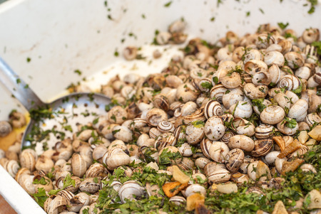 hundreds: Lots of pile snails from an Sicilian market. closeup