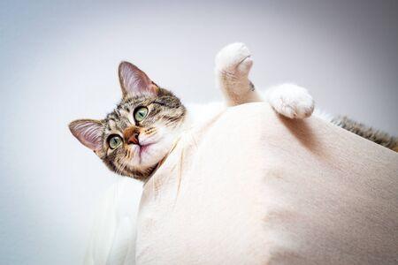 Curious cat above mattress. closeup