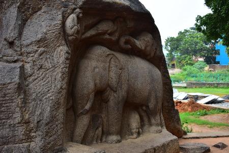 Chennai, Tamilnadu - India - September 09, 2018: Rock cut sculptures representing a gorup of elephants