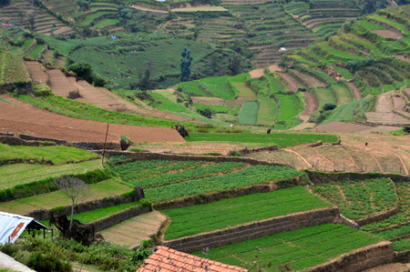 Terrace Farming in Kodaikanal Stock Photo
