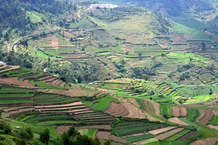 Green terraced fields in Poombarai