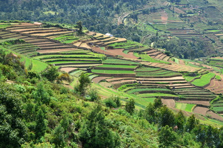 Poombarai Village and terraced farming in Kodaikanal